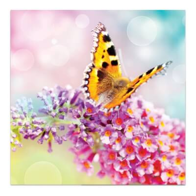 Greeting Card - Butterfly On Blossom