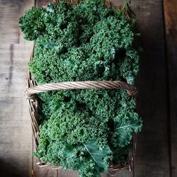 Curly Kale  Grown In Galway