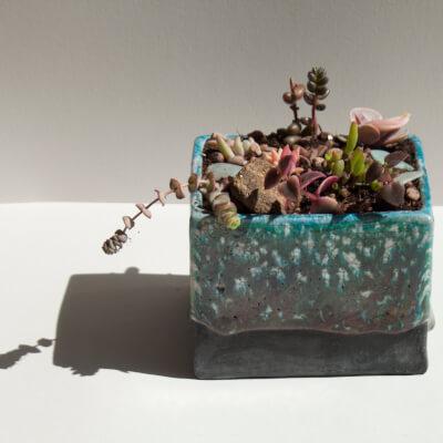 Square Bronzed Turquoise Raku Planter With Succulent Gardens