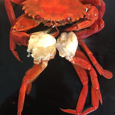 Cooked Velvet-Crab