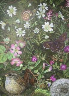 Wren & Ringlet Butterfly Large Blank Card