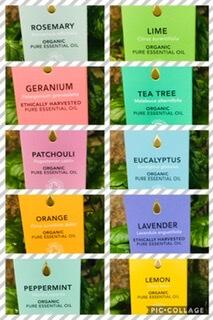 Organic Tisserand Essential Patchouli Oil