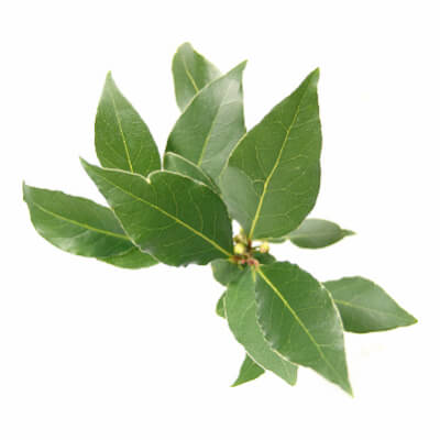 Bay Leaf Bunch