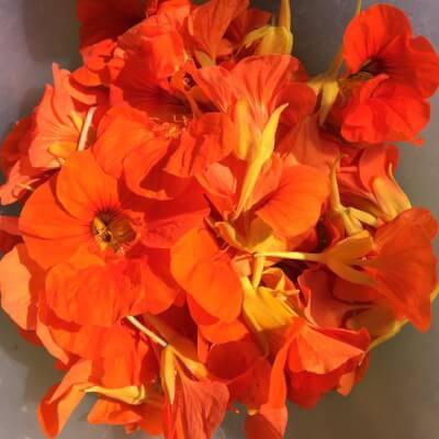 Nasturium Flowers & Leaves