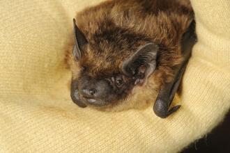 Bat Box Reduced Price!