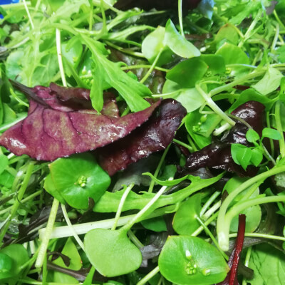 Mixed Leaves