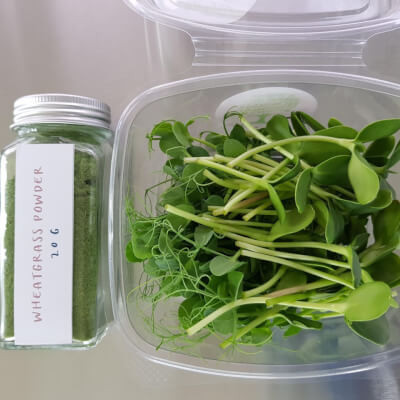 Microgreens - Doggy & Moggie Starter Kit (Fresh Peas & Sunflowers) Plus Spelt Wheatgrass Powder