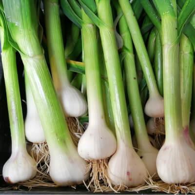 Fresh Garlic Bulb