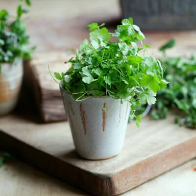Parsley Microgreens