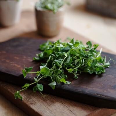 Pea Shoot Microgreens