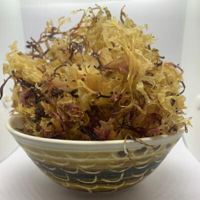 Carrageen Moss (100G +-)