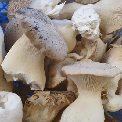 King Oyster Mushrooms (200G+-)