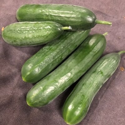 Snack Cucumber