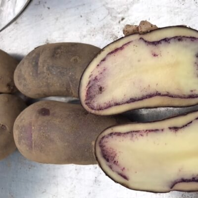 Potatoes- Shetland Black