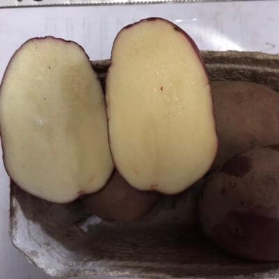 New Potatoes- Red Duke Of York