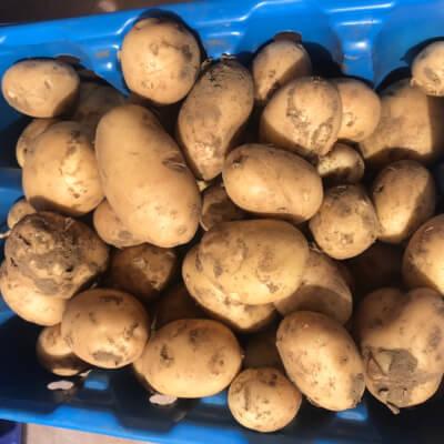 New Potato- Javelin