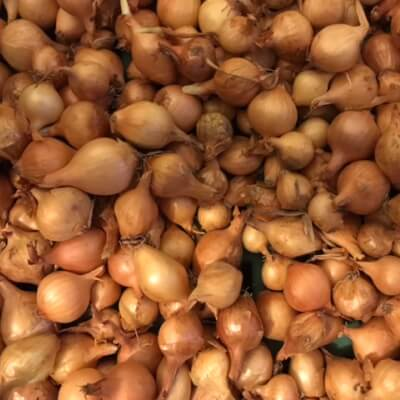 Grow Your Own  - Overwintering Onions Brown