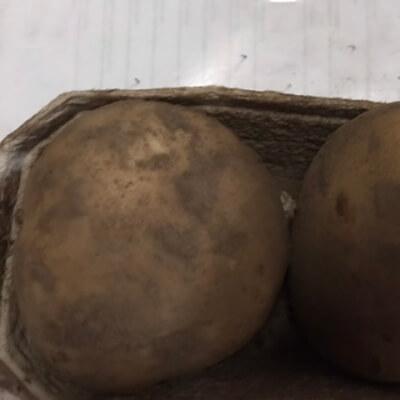 Potatoes - Large Gatsby (Baking Potatoes)