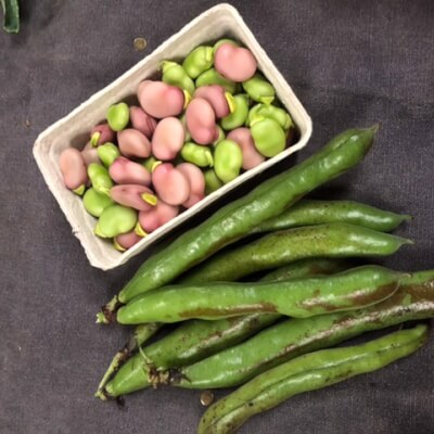 Broad Beans In Their Shells