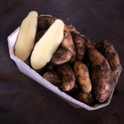 Potato - Pink Fir Apple
