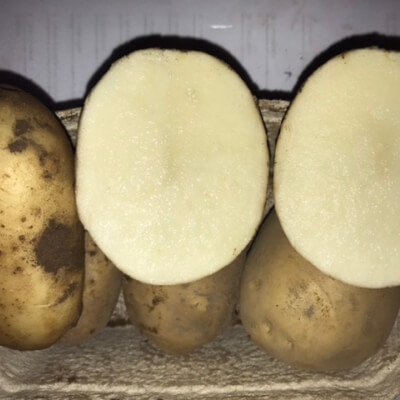 Potato- Javelin