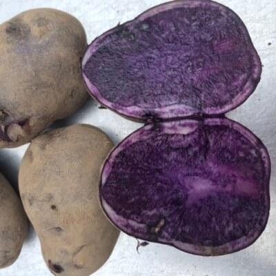 Potatoes - Heritage Bundle