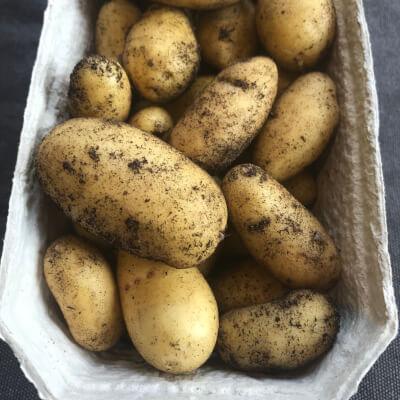 New Potatoes - White Duke Of York
