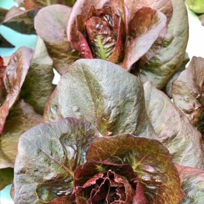 Red Baby Cos Lettuces (2Pk)