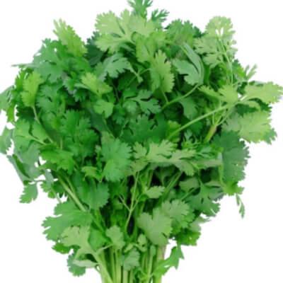 Coriander Herb Bunch