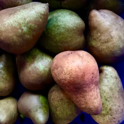 Pears - Large