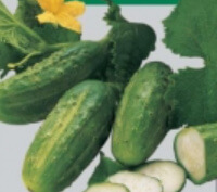 Cucumbers Mid Size