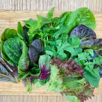 Salad Leaves-Summer Mix