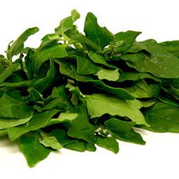 Sea Spinach