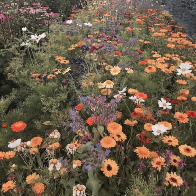 Pick Your Own Flower Voucher