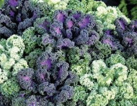Mix Kale