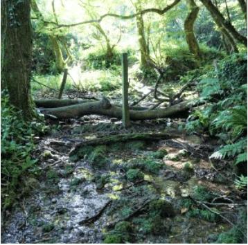 Help Create A Leaky Woody Dam