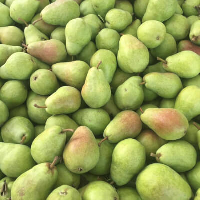 Pears Conference