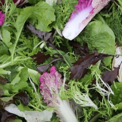 Salad Pack Wales