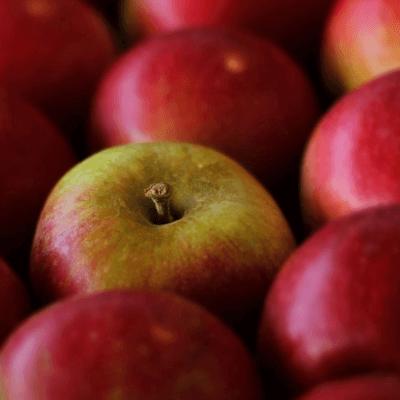 Apples Red Windsor