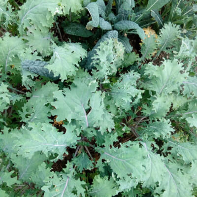 Kale Mix