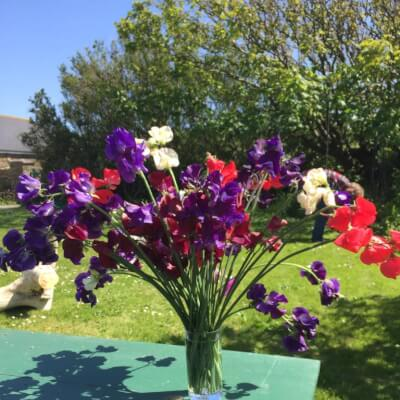 Bunch Of Sweet Pea Flowers