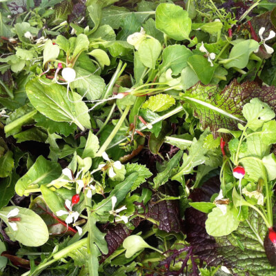 Fiery Mixed Leaves 500G