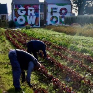 Ballymaloe Cookery School - Organic Farm & Gardens