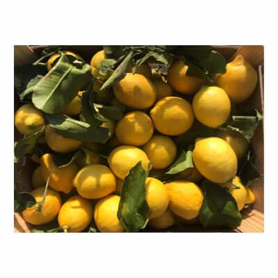 Spiced Lemon Water Kefir Large 1 Litre Bottle