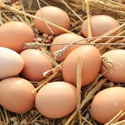 6 Organic Free Range Eggs