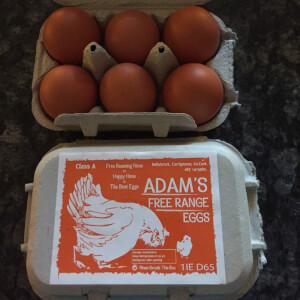 Adams Eggs