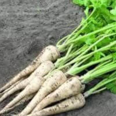 Organic Parsnip