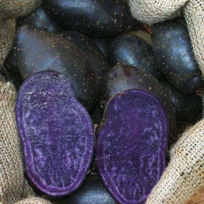 Seed Potato Blue Annelise - Organic