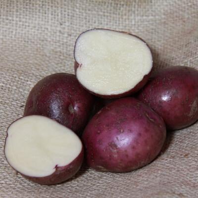 Seed Potatoes Arran Victory - Organic