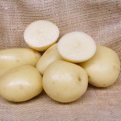 Seed Potato Casablanca - Organic